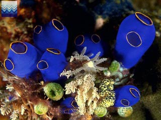 Доклад о морской губке 9696